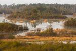 Early Morning Light over Chesser Prairie, Okefenokee National Wildlife Refuge, near Folkston, GA