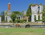 Wild Horses at Dungeness Ruins