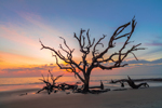 Old Snags on Driftwood Beach at Predawn, Jekyll Island, GA
