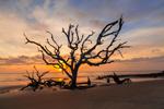 Old Snags on Driftwood Beach at Sunrise, Jekyll Island, GA