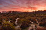 Predawn over Chesser Prairie, Okefenokee National Wildlife Refuge, near Folkston, GA