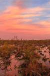 Predawn over Chesser Prairie, Okefenokee National Wildlife Refuge, near Folkston, GA