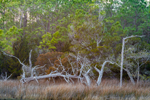 Woodlands along Shoreline of White Oak River at Cedar Point Recreation Area, Croatan National Forest, Swansboro, NC