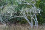 Woodlands along Shoreline of White Oak River at Cedar Point Recreation Area, Croatan National Forest, Swansboro, NC