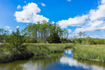 Howland Creek and Salt Marsh in Spring, Carteret County, Williston, NC