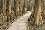 Boardwalk through Bald Cypress Swamp, Congaree National Park, near Gadsden, SC