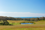 Cattle Grazing in Fields with Oak Forest and Atlantic Ocean in Background, Beetlebung Farm, Martha's Vineyard, Chilmark, MA
