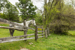 Horse in Pasture with Wooden Fence, Pioneer Valley, Deerfield, MA