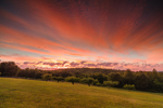 Dramatic Sunrise over Fruit Orchard, Royalston, MA