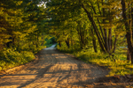 Late Evening Light Shines on Forest Road through Birch Hill Recreation and Wildlife Management Area, Royalston, MA