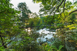 Early Morning along Millers River, Bearsden Conservation Area, Athol, MA