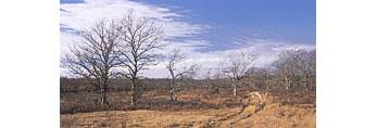Maneul F. Correllus State Forest