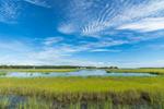 Salt Marshes on Mud Creek, Long Island, Southold, NY