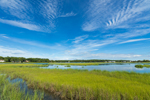 Salt Marshes on Mud Creek, Long Island, Southold, NY