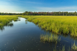 Mill Creek and Salt Marshes, Hubbard County Park, Long Island, Southampton, NY