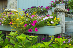 Flower Box with Colorful Flowers with Nautical Lines and Pilings, Martha's Vineyard, Edgartown, MA