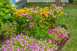 Colorful Flowers in Country Garden, Martha's Vineyard, Oak Bluffs, MA