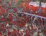 Fallen Snag, Inner Forest