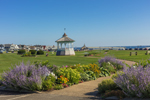 Colorful Flowers along Walkway in Ocean Park with Gazebo in Background, Martha's Vineyard, Oak Bluffs, MA