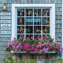 Window Box of Flowers at Captain Porky's Bait and Tackle, Martha's Vineyard, Edgartown, MA