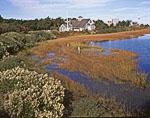 Lifesaving Museum, Marsh and Sea Myrtle