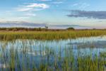 Salt Marsh near Potter Cove in Early Evening Light, Narragansett Bay National Estuarine Research Reserve, Prudence Island, Portsmouth, RI