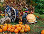 Wagon and Pumpkins in Fall at Bob's Vegetable Stand
