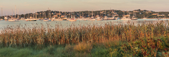 Cuttyhunk Pond and Salt Marsh in Early Morning Light, Cuttyhunk Island, Elizabeth Islands, Town of Gosnold, MA