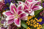 Pink and White Lilies in Colorful Bouquet of Flowers, Martha's Vineyard, Oak Bluffs, MA