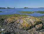 Lichen-covered Rocks and Tidal Zone on Turnip Island out to Dumpling Islands, Cross Island, and Fox Island Thorofare