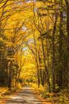 Fall Foliage along Jefferson Notch Road, White Mountains Region, Twin Mountain, NH