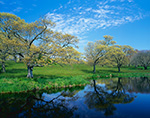 Oak Trees, Meadow and Pond in Springtime on Turtle Rock Farm