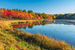 Colorful Foliage along Shoreline of Perkins Pond, Monadnock Region, Troy, NH