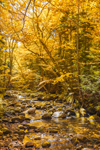 Jefferson Brook in Fall, White Mountain National Forest, Twin Mountain, NH