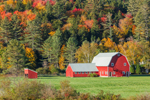 Red Barns in Fall, Landgrove, VT