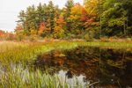 Small Pond and Marsh near Collins Pond in Fall, Fitzwilliam, NH
