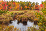 Sip Pond Brook and Bordering Wetlands in Fall, Fitzwilliam, NH