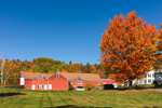 Red Barns at Maplehurst Farm in Fall, White Mountains Region, Sugar Hill, NH