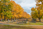 Sugar Maple Trees in Fall at Maplewood Cemetery, Antrim, NH
