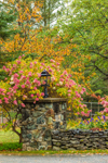 Hydrangeas and Stone Wall with Lantern in Fall, White Mountains Region, Sugar Hill, NH