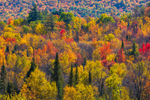 Close Up of Fall Foliage on Mountainside in White Mountain National Forest, View from Sugar Hill, NH