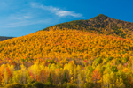 Brilliant Fall Foliage on Mountainside of Owlshead, White Mountain National Forest, Jefferson, NH