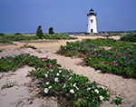Edgartown Light with Roses in Bloom, Martha's Vineyard