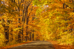 Brilliant Fall Foliage along Country Road, Northeast Kingdom, Barton, VT