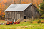 Old Natural Wood Barn with Antique 170 Allis-Chalmers Tractor in Fall, Northeast Kingdom, Newark, VT