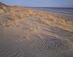 Beach Grasses, Horseneck Beach