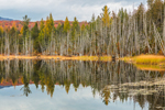 Dolloff Pond with Reflections in Fall, Willoughby State Forest, Northeast Kingdom, Sutton, VT