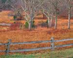 Meadow at Brine's Pond, Chappaquiddick Island, Martha's Vineyard, Edgartown, MA