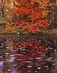 Fall Reflections at Scott Brook