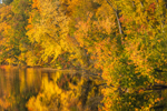 Early Evening Light Shines on Colorful Fall Foliage along Connecticut River, Hinsdale, NH